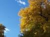 b-fall-her-branches.jpg